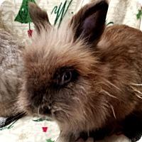 Adopt A Pet :: Teddy - Williston, FL