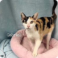Adopt A Pet :: Gabriel - Foothill Ranch, CA