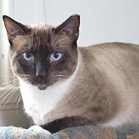 Adopt A Pet :: Artemis - Alameda, CA