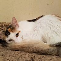 Adopt A Pet :: Delilah - Walla Walla, WA
