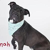 Adopt A Pet :: *JONAH - Sacramento, CA