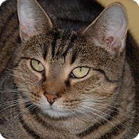 Adopt A Pet :: Gretel - Shelbyville, TN