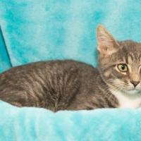 Adopt A Pet :: Logan - Santa Fe, TX