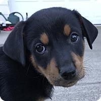 Adopt A Pet :: Arianna - Tumwater, WA