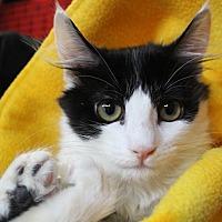 Adopt A Pet :: Genesis - Sarasota, FL