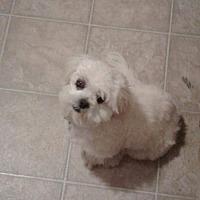 Adopt A Pet :: Breezy Turner - Urbana, OH