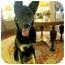 Photo 4 - German Shepherd Dog Dog for adoption in Dripping Springs, Texas - Zach