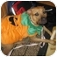 Photo 1 - Pit Bull Terrier/Rhodesian Ridgeback Mix Dog for adoption in Los Angeles, California - Harlie Quinn