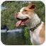 Photo 1 - American Pit Bull Terrier Mix Puppy for adoption in Framingham, Massachusetts - Charlee