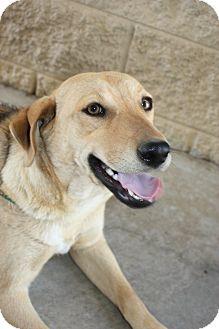 Labrador Retriever Mix Dog for adoption in Stilwell, Oklahoma - Betty
