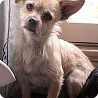 Adopt A Pet :: Franklin - Santa Monica, CA