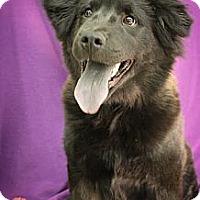 Adopt A Pet :: Paradise - Broomfield, CO