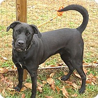 Adopt A Pet :: Solomon - PENDING, in Maine - kennebunkport, ME