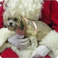 Adopt A Pet :: Malinda - San Angelo, TX