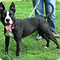 Adopt A Pet :: Sandy - Middletown, NY