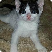 Adopt A Pet :: Spec - Chandler, AZ