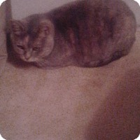 Adopt A Pet :: Sweety Pie _ Courtesy Post - Columbia, MD