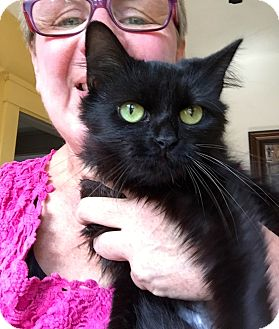 Turkish Angora Kitten for adoption in Cincinnati, Ohio - Sigourney: Covedale
