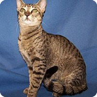 Adopt A Pet :: Jagger - Colorado Springs, CO