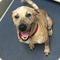 Adopt A Pet :: Scout - Jupiter, FL
