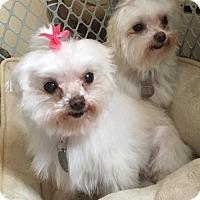 Adopt A Pet :: Bridget and Bocci - Bucks County, PA