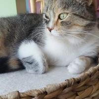 Adopt A Pet :: Ceres - Montreal, QC