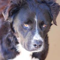 Adopt A Pet :: McCoy - Toccoa, GA