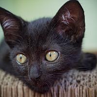 Adopt A Pet :: Eros - Los Angeles, CA