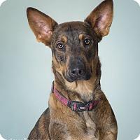 Adopt A Pet :: Twila - Phoenix, AZ