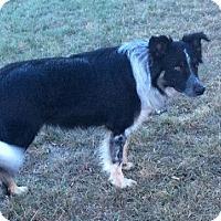 Adopt A Pet :: Baron - Denver, CO