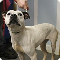 Adopt A Pet :: Ellie Mae - Delaware, OH