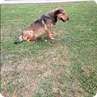 Adopt A Pet :: Jack - Bristol, TN