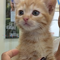 Adopt A Pet :: Todd - Redondo Beach, CA