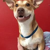 Adopt A Pet :: Pluto - Centerville, GA