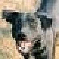 Adopt A Pet :: Bella Donna - Rossville, TN