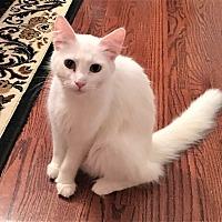 Adopt A Pet :: Elsa - Chattanooga, TN
