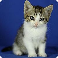 Adopt A Pet :: Rome - Winston-Salem, NC