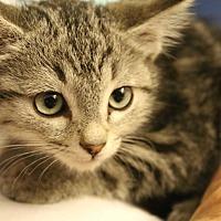 Adopt A Pet :: Glacier - Temecula, CA
