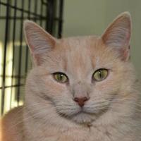 Adopt A Pet :: Buttercup - Elkhorn, WI