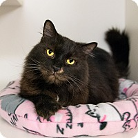 Adopt A Pet :: Sampson-Petco Stronsville - Seville, OH
