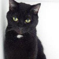 Adopt A Pet :: Kitley - Queenstown, MD