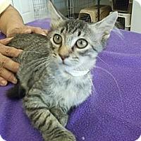 Adopt A Pet :: Cyrus - Bunnell, FL