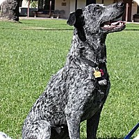 Adopt A Pet :: Breeze - Phoenix, AZ