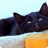 Adopt A Pet :: Scottie - Victor, NY