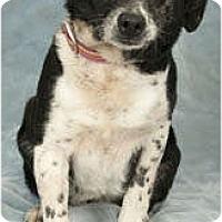 Adopt A Pet :: Susie-Q - Chicago, IL