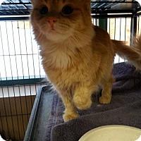Adopt A Pet :: Sunkist - Hamilton, ON