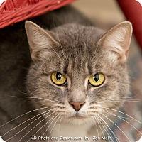 Adopt A Pet :: Sarah II - Fountain Hills, AZ