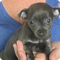 Adopt A Pet :: LuLu - Greenville, RI