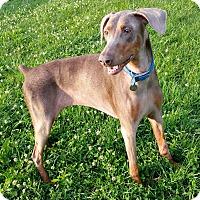Adopt A Pet :: Lanie - New Richmond, OH