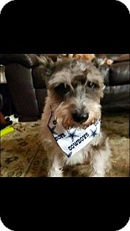 Terrier (Unknown Type, Small) Mix Dog for adoption in Rexford, New York - Brandon